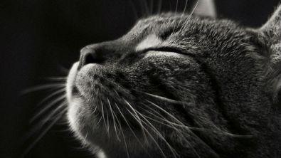 gatto-fusa1