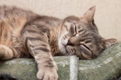 gatto_che_dorme_sempre_e_normale_824_600