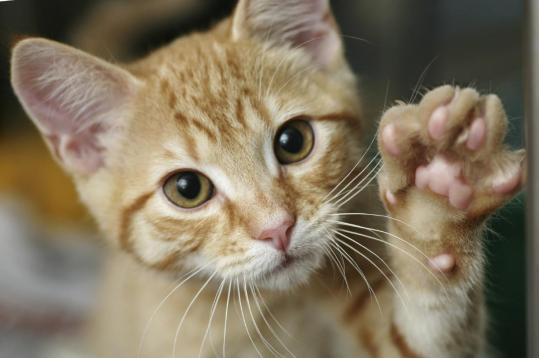 graffio-gatto